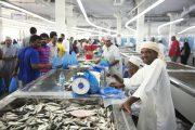 fish market muttrah