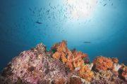 Snorkeling Dive Muscat