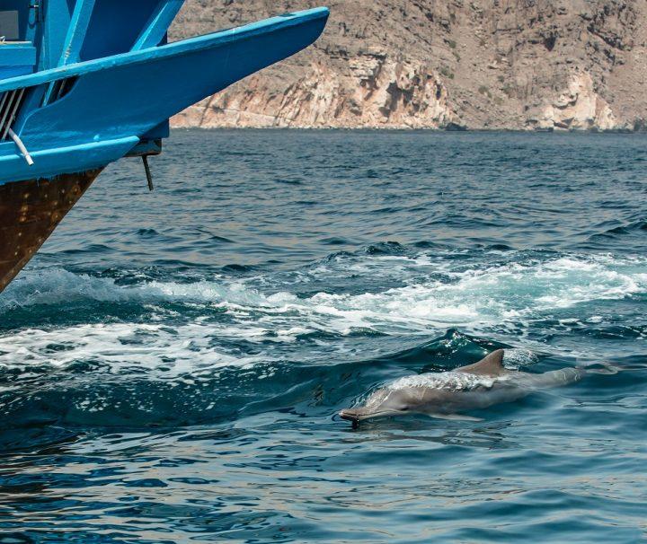 oman dolphins