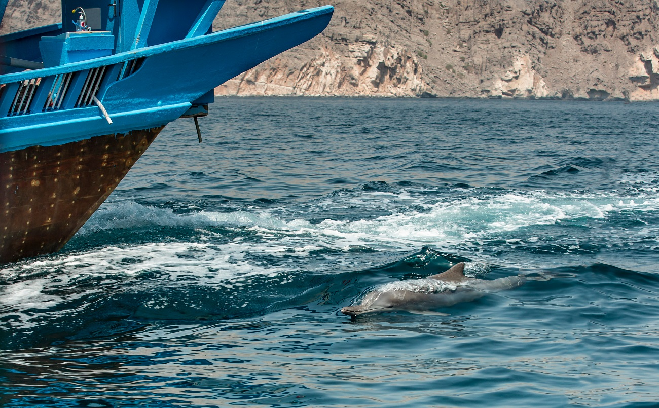 oman dolphins